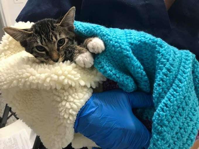 Kitten in fleece