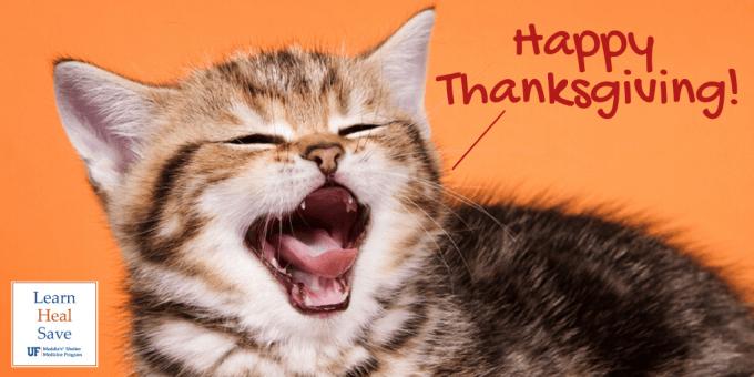 Kitten saying Happy Thanksgiving on orange background