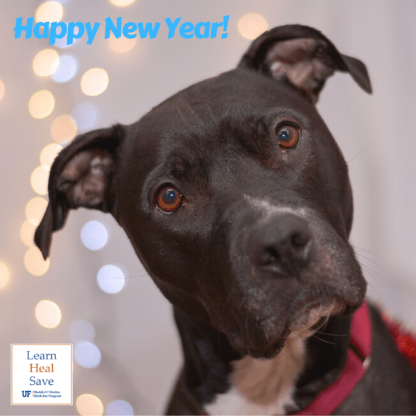 black dog tilting head with backgrond of lights. feeling of new year's eve