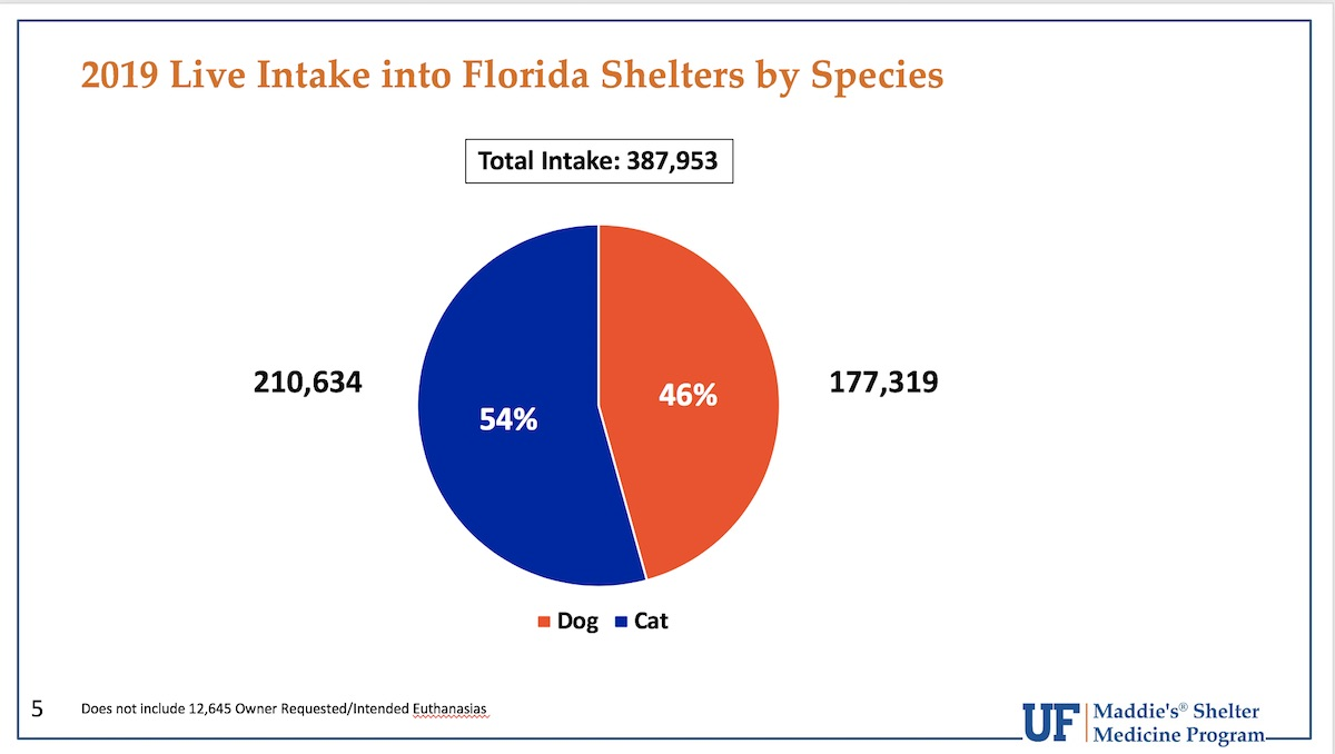 2019 Live Intake into Florida Shelters by Species