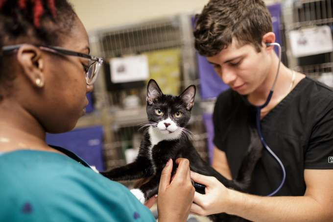 vet students examine a cat