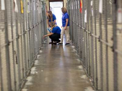 Consultants in a kennel
