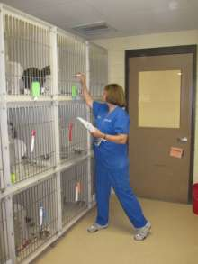 Dr. Julie Levy, program director and professor of Shelter Medicine, examines cat housing and enrichment during an assessment.