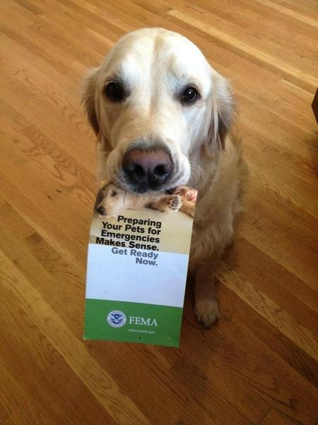 Dog holding emergency preparedness flyer