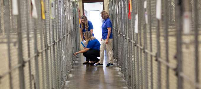 Dr. Levy and students at an animal shelter.