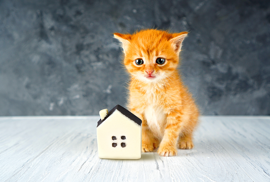 Small kitten with toy house