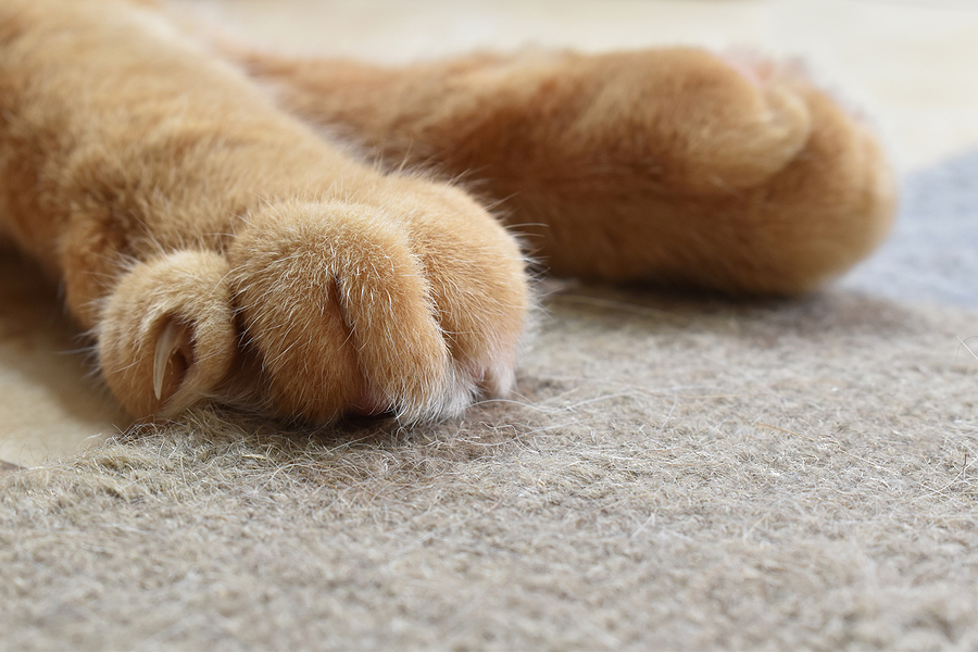 Ginger Cat Paws And Claws