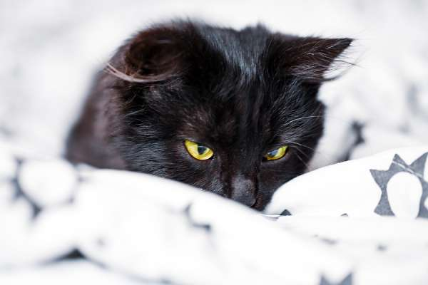 A black kitten lies on the couch. Selective focus. Horizontal.